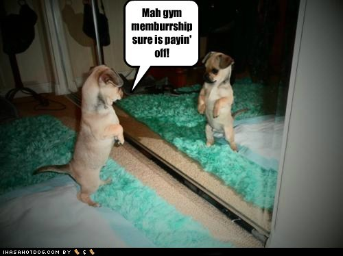 funny dog pictures mah gym memburrship sure is payin off Piesio