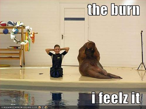 gym funny pictures aquatic mammal does exercise and feels the burn Brzuszki